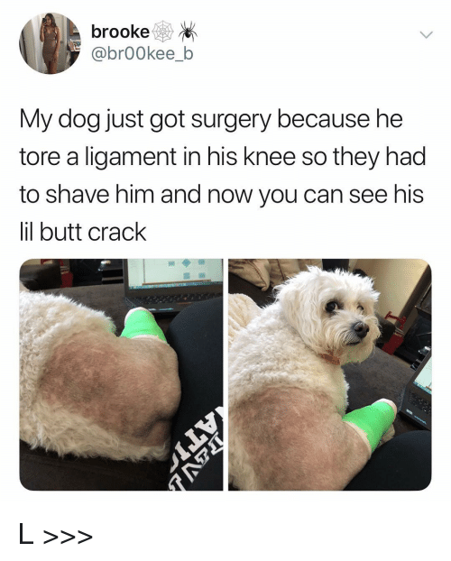 Butt, Memes, and 🤖: brooke  @brOOkee_b  My dog just got surgery because he  tore a ligament in his knee so they had  to shave him and now you can see his  il butt crack L >>>