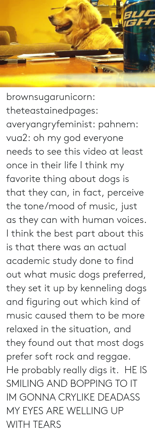 Dogs, God, and Life: brownsugarunicorn:  theteastainedpages:  averyangryfeminist:  pahnem:  vua2:  oh my god  everyone needs to see this video at least once in their life  I think my favorite thing about dogs is that they can, in fact, perceive the tone/mood of music, just as they can with human voices.  I think the best part about this is that there was an actual academic study done to find out what music dogs preferred, they set it up by kenneling dogs and figuring out which kind of music caused them to be more relaxed in the situation, and they found out that most dogs prefer soft rock and reggae. He probably really digs it.   HE IS SMILING AND BOPPING TO IT IM GONNA CRYLIKE DEADASS MY EYES ARE WELLING UP WITH TEARS