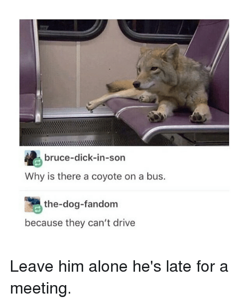 Being Alone, Funny, and Coyote: bruce-dick-in-son  Why is there a coyote on a bus.  the-dog-fandom  because they can't drive Leave him alone he's late for a meeting.