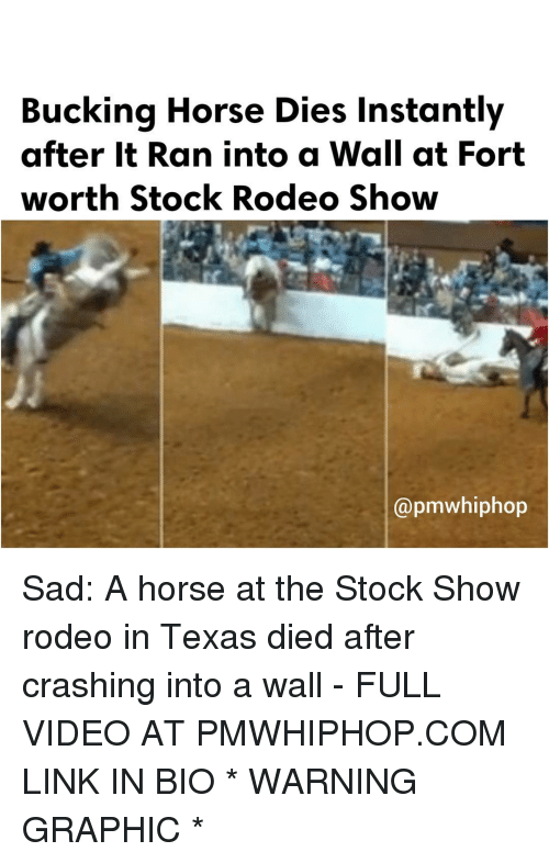 Memes, Texas, and Rodeo: Bucking Horse Dies instantly  after it Ran into a Wall at Fort  worth Stock Rodeo Show  apmwhiphop Sad: A horse at the Stock Show rodeo in Texas died after crashing into a wall - FULL VIDEO AT PMWHIPHOP.COM LINK IN BIO * WARNING GRAPHIC *