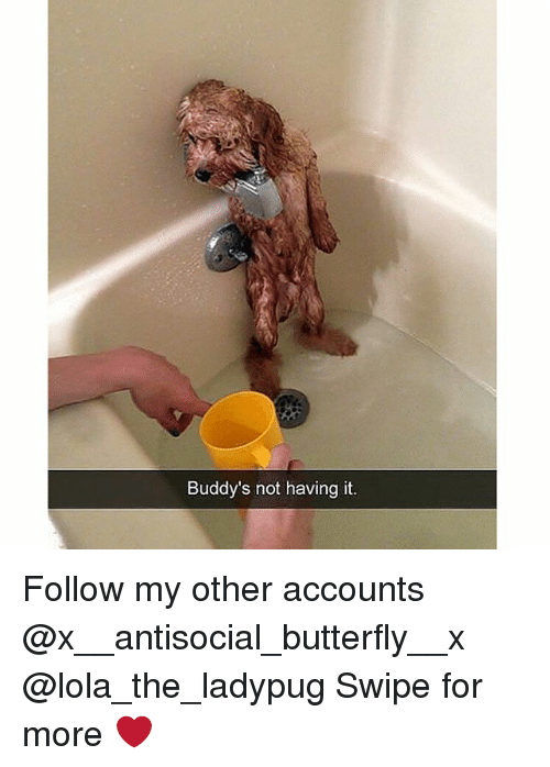 Memes, Butterfly, and Antisocial: Buddy's not having it. Follow my other accounts @x__antisocial_butterfly__x @lola_the_ladypug Swipe for more ❤️
