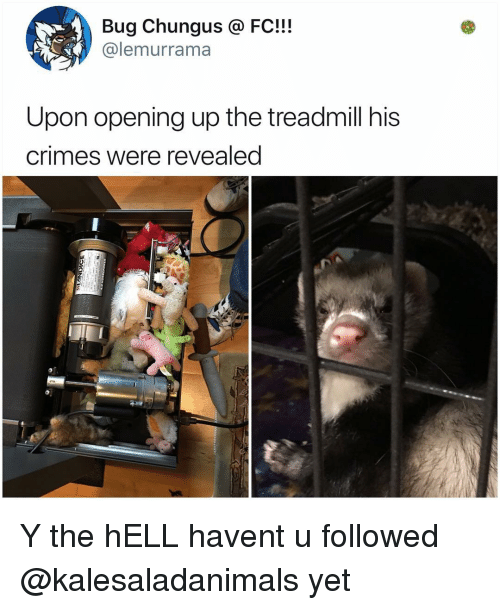 Memes, Treadmill, and Hell: Bug Chungus @ FC!!!  @lemurrama  Upon opening up the treadmill his  crimes were revealed Y the hELL havent u followed @kalesaladanimals yet