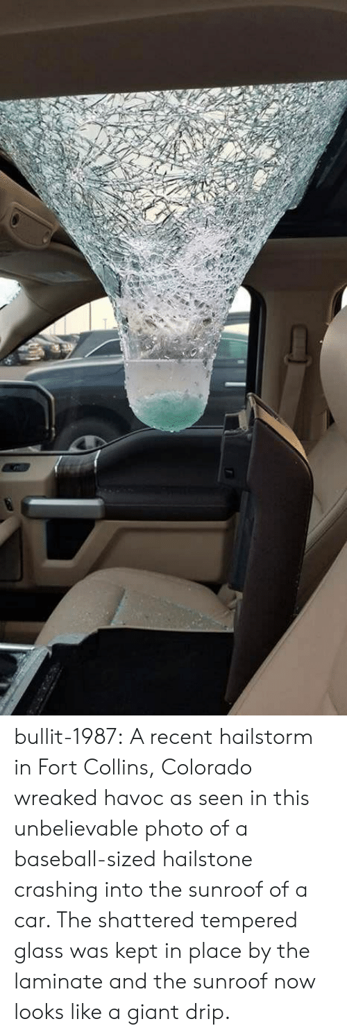 Baseball, Tumblr, and Blog: bullit-1987: A recent hailstorm in Fort Collins, Colorado wreaked havoc as seen in this unbelievable photo of a baseball-sized hailstone crashing into the sunroof of a car. The shattered tempered glass was kept in place by the laminate and the sunroof now looks like a giant drip.