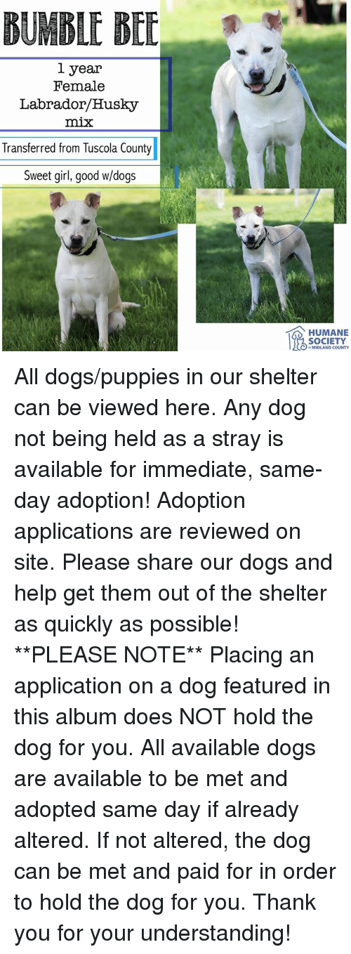 Dogs, Memes, and Puppies: BUMBLE BEE  1 year  Female  Labrador/Husky  mix  Transferred from Tuscola County  Sweet girl, good w/dogs  HUMANE  SOCIETY  0 MIDLAND COUNTY All dogs/puppies in our shelter can be viewed here.  Any dog not being held as a stray is available for immediate, same-day adoption! Adoption applications are reviewed on site. Please share our dogs and help get them out of the shelter as quickly as possible!  **PLEASE NOTE**  Placing an application on a dog featured in this album does NOT hold the dog for you.  All available dogs are available to be met and adopted same day if already altered.  If not altered, the dog can be met and paid for in order to hold the dog for you.  Thank you for your understanding!