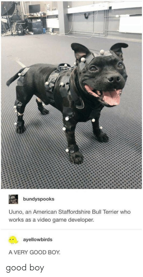 Americanization: bundyspooks  Uuno, an American Staffordshire Bull Terrier who  works as a video game developer.  ayellowbirds  A VERY GOOD BOY good boy