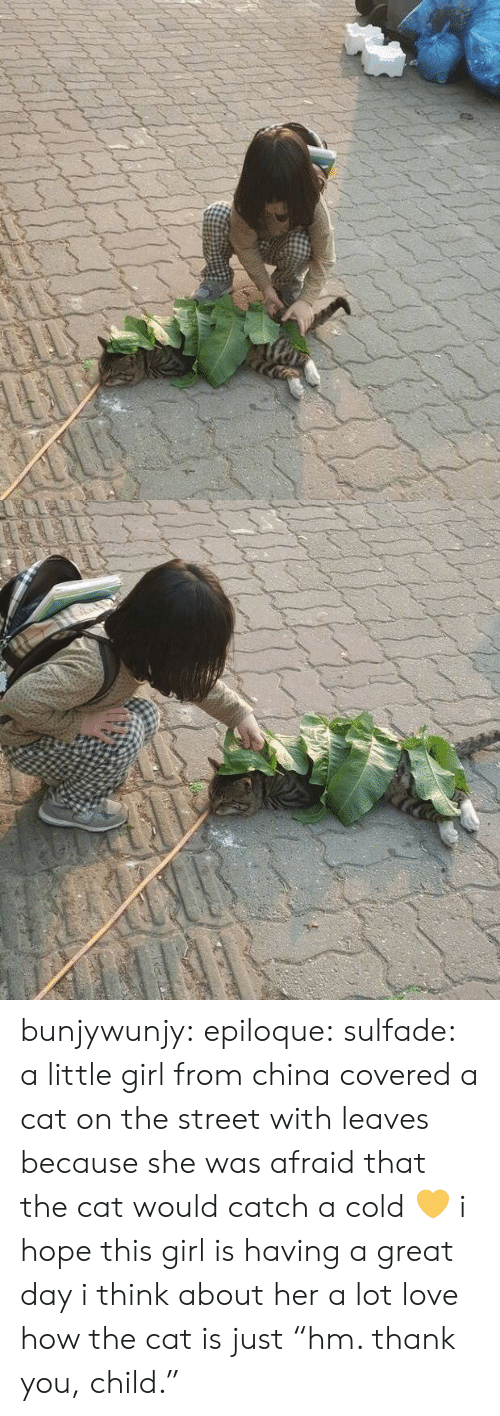 "Love, Tumblr, and China: bunjywunjy:  epiloque:  sulfade: a little girl from china covered a cat on the street with leaves because she was afraid that the cat would catch a cold 💛  i hope this girl is having a great day i think about her a lot   love how the cat is just ""hm. thank you, child."""