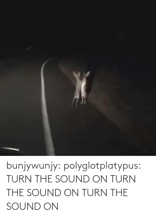 sound: bunjywunjy:  polyglotplatypus:    TURN THE SOUND ON TURN THE SOUND ON TURN THE SOUND ON