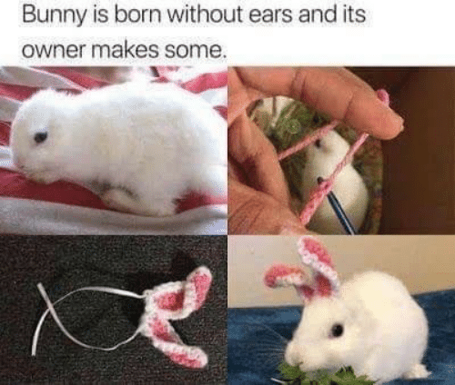 Bunny, Born, and Owner: Bunny is born without ears and its  owner makes some