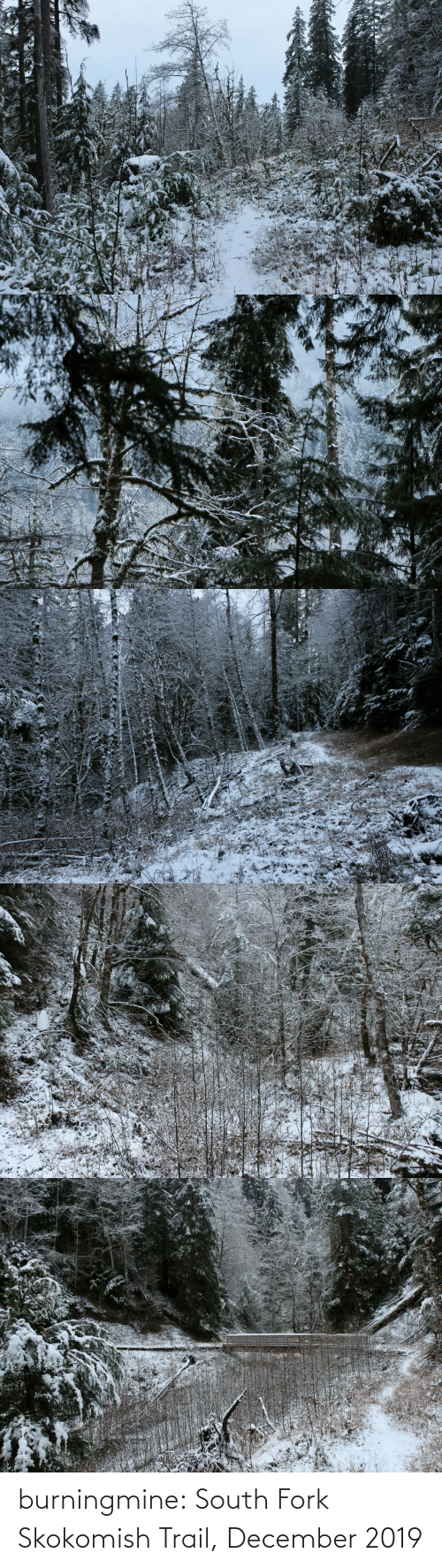 south: burningmine:  South Fork Skokomish Trail, December 2019