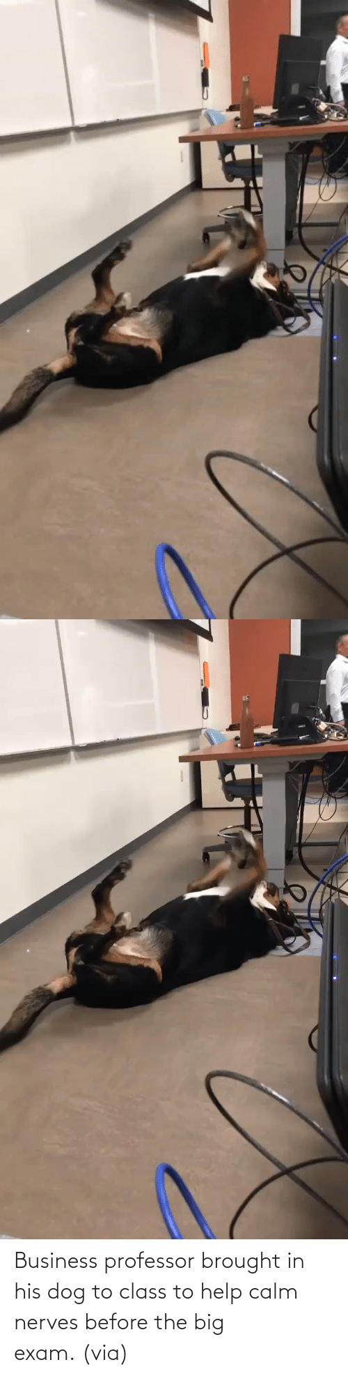 Imgur: Business professor brought in his dog to class to help calm nerves before the big exam. (via)