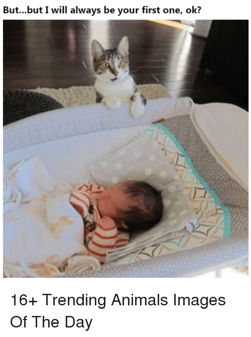 Animals, Images, and One: But...but I will always be your first one, ok? 16+ Trending Animals Images Of The Day