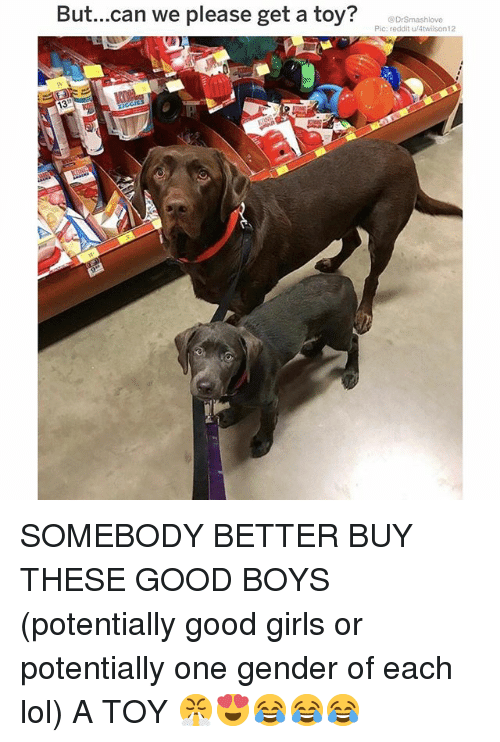 Girls, Lol, and Memes: But...can we please get a toy?  @DrSmashlove  Pic: reddit u/4twilson12  13 SOMEBODY BETTER BUY THESE GOOD BOYS (potentially good girls or potentially one gender of each lol) A TOY 😤😍😂😂😂