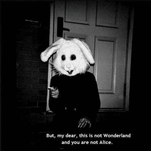 my dear: But, my dear, this is not Wonderland  and you are not Alice