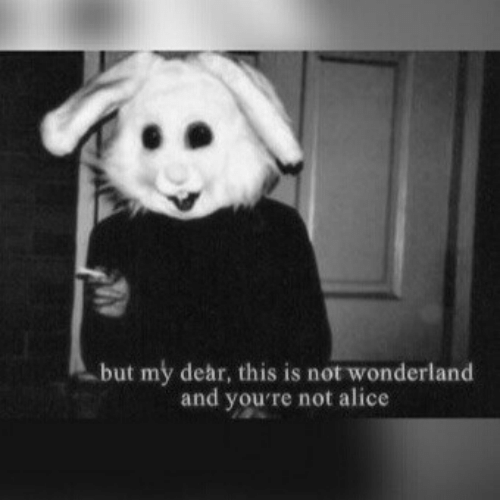 my dear: but my dear, this is not wonderland  and you're not alice