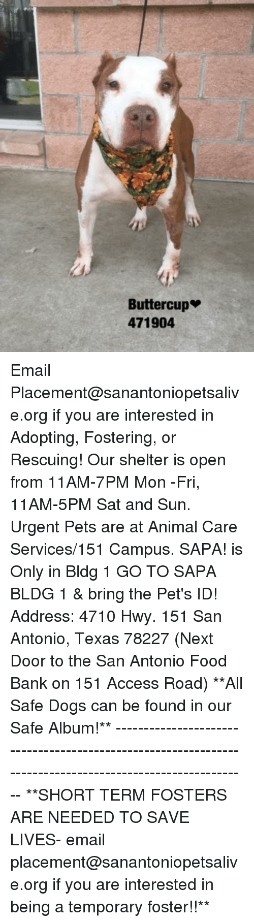 Dogs, Food, and Memes: Buttercup  471904 Email Placement@sanantoniopetsalive.org if you are interested in Adopting, Fostering, or Rescuing!  Our shelter is open from 11AM-7PM Mon -Fri, 11AM-5PM Sat and Sun.  Urgent Pets are at Animal Care Services/151 Campus. SAPA! is Only in Bldg 1 GO TO SAPA BLDG 1 & bring the Pet's ID! Address: 4710 Hwy. 151 San Antonio, Texas 78227 (Next Door to the San Antonio Food Bank on 151 Access Road)  **All Safe Dogs can be found in our Safe Album!** ---------------------------------------------------------------------------------------------------------- **SHORT TERM FOSTERS ARE NEEDED TO SAVE LIVES- email placement@sanantoniopetsalive.org if you are interested in being a temporary foster!!**