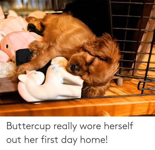 Herself: Buttercup really wore herself out her first day home!