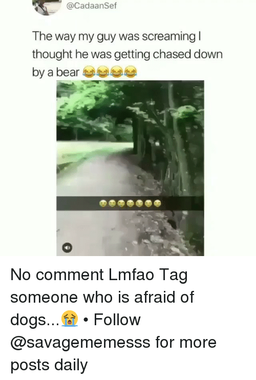 Dogs, Memes, and Bear: @CadaanSef  The way my guy was screaming l  thought he was getting chased down  by a bear No comment Lmfao Tag someone who is afraid of dogs...😭 • Follow @savagememesss for more posts daily