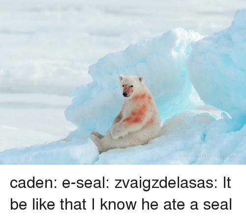 Be Like, Tumblr, and Blog: caden:  e-seal:  zvaigzdelasas:  It be like that   I know he ate a seal