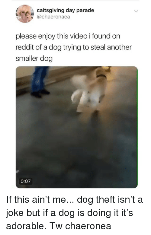 Memes, Reddit, and Video: caitsgiving day parade  y @chaeronaea  please enjoy this video i found orn  reddit of a dog trying to steal another  smaller dog  0:07 If this ain't me... dog theft isn't a joke but if a dog is doing it it's adorable. Tw chaeronea