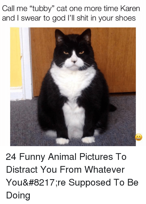 "Funny, God, and Shit: Call me ""tubby"" cat one more time Karern  and I swear to god l'll shit in your shoes  15 24 Funny Animal Pictures To Distract You From Whatever You're Supposed To Be Doing"