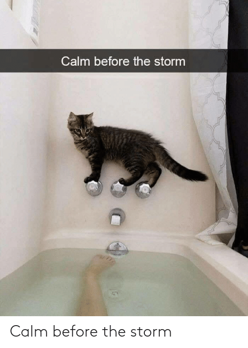 calm: Calm before the storm
