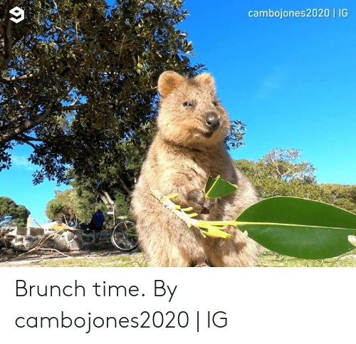 brunch: cambojones2020 | IG Brunch time.  By cambojones2020 | IG