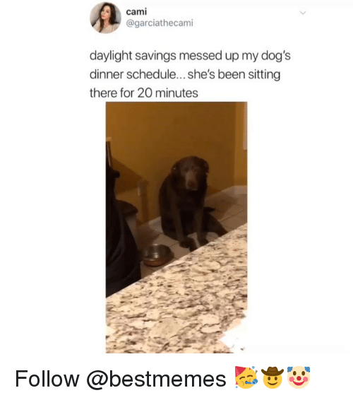 Dogs, Memes, and Daylight Savings: cami  @garciathecami  daylight savings messed up my dog's  dinner schedule...she's been sitting  there for 20 minutes Follow @bestmemes 🥳🤠🤡