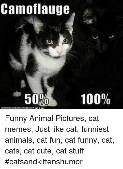 Camoflauge 50 100 Funny Animal Pictures Cat Memes Just Like Cat