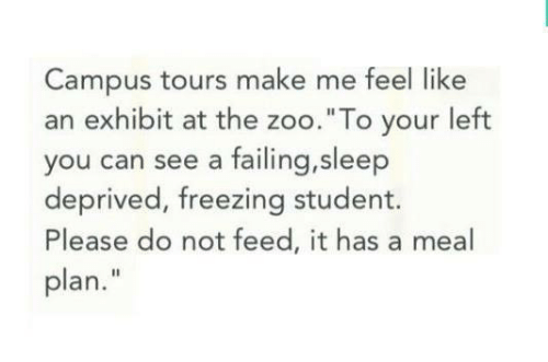 "Sleep, Freezing, and Zoo: Campus tours make me feel like  an exhibit at the zoo.""To your left  you can see a failing,sleep  deprived, freezing student.  Please do not feed, it has a meal  plan."""