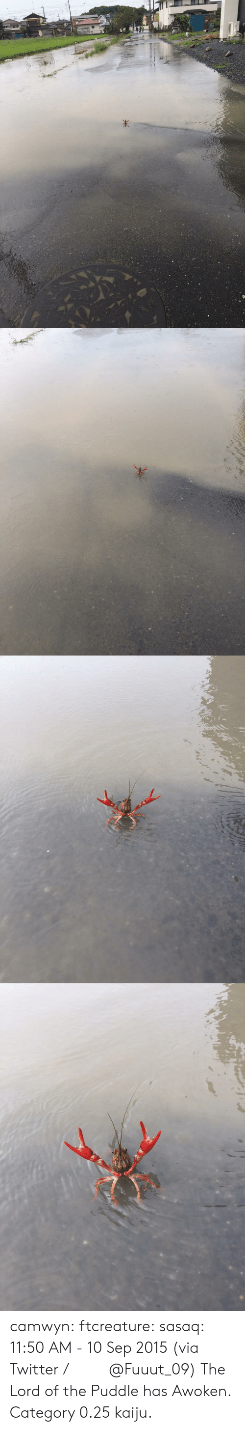 kaiju: camwyn:  ftcreature:  sasaq:  11:50 AM - 10 Sep 2015 (via Twitter / ふ み な @Fuuut_09)   The Lord of the Puddle has Awoken.  Category 0.25 kaiju.