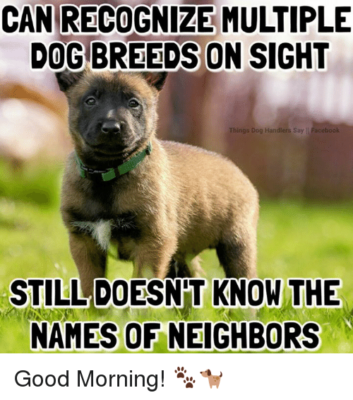 Good Morning Meme Dog : Best memes about dog breeds