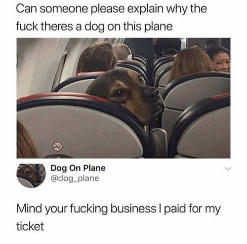 Fucking, Business, and Fuck: Can someone please explain why the  fuck theres a dog on this plane  Dog On Plane  @dog_plane  Mind your fucking business I paid for my  ticket