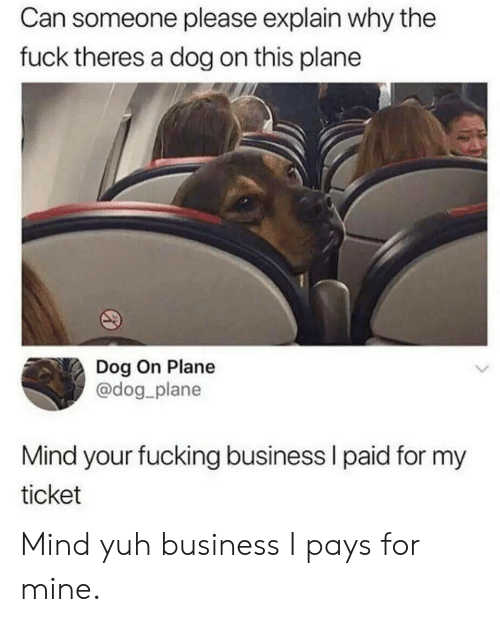 Fucking, Business, and Fuck: Can someone please explain why the  fuck theres a dog on this plane  Dog On Plane  @dog plane  Mind your fucking business l paid for my  ticket Mind yuh business I pays for mine.