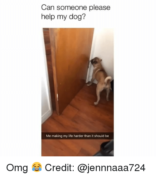 Life, Memes, and Omg: Can someone pleasee  help my dog?  Me making my life harder than it should be Omg 😂 Credit: @jennnaaa724
