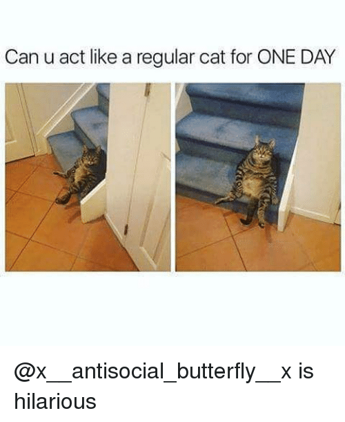 Hilariousness: Can u act like a regular cat for ONE DAY @x__antisocial_butterfly__x is hilarious