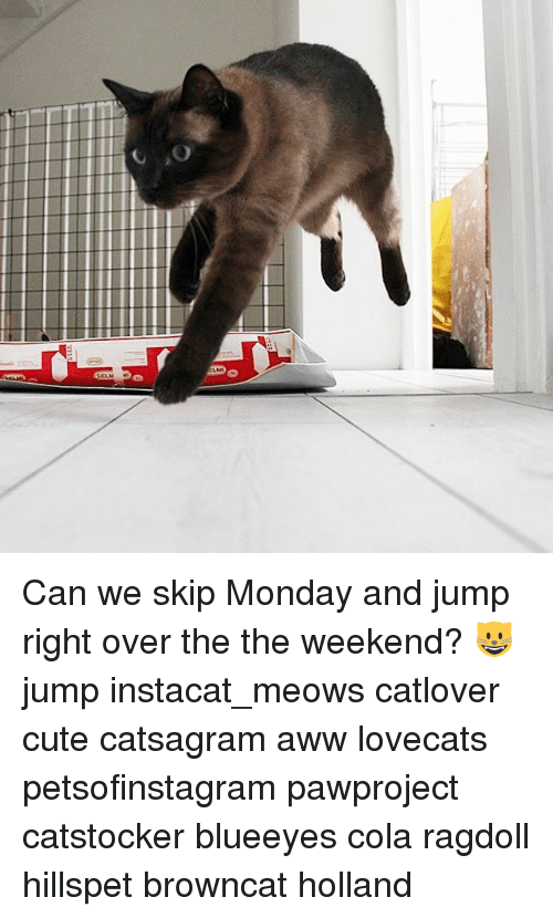 Awwing: Can we skip Monday and jump right over the the weekend? 😺 jump instacat_meows catlover cute catsagram aww lovecats petsofinstagram pawproject catstocker blueeyes cola ragdoll hillspet browncat holland