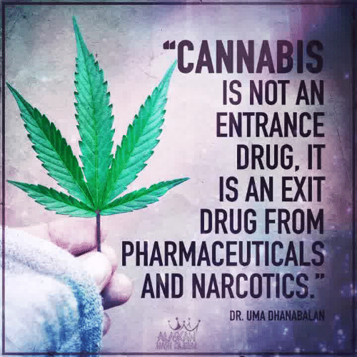 Memes, Cannabis, and Drug: CANNABIS  IS NOT AN  ENTRANCE  DRUG, IT  IS AN EXIT  DRUG FROM  PHARMACEUTICALS  AND NARCOTICS  DR. UMA DHANABALAN