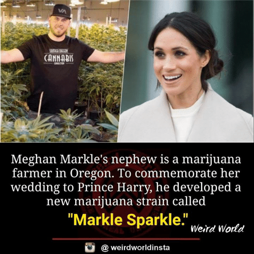 "Memes, Prince, and Prince Harry: CANNABIS  Meghan Markle's nephew is a marijuana  farmer in Oregon. To commemorate her  wedding to Prince Harry, he developed a  new marijuana strain called  ""Markle Sparkle. weird Warta  @ weirdworldinsta"