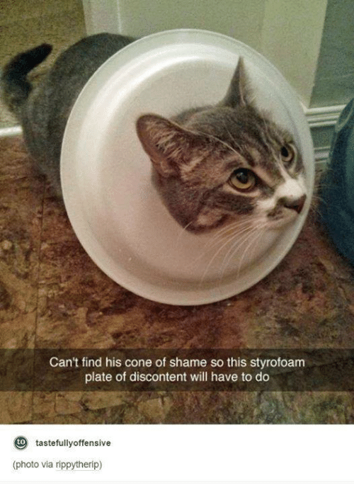 Dank, 🤖, and Photos: Can't find his cone of shame so this styrofoam  plate of discontent will have to do  tastefully offensive  (photo via rippytherip)