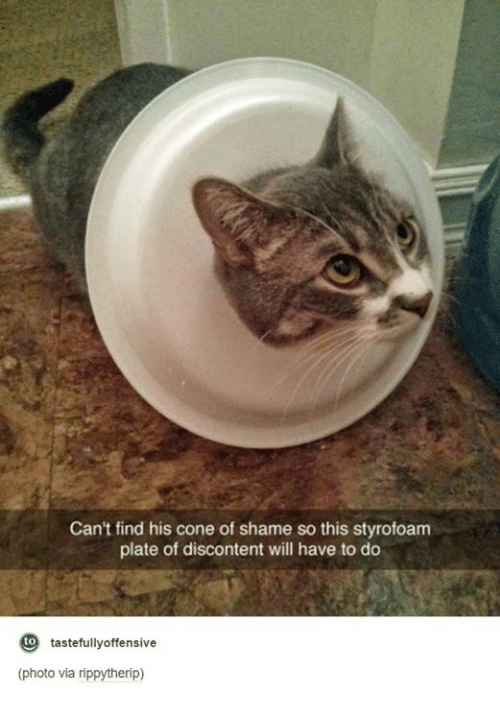 Humans of Tumblr, Shame, and Via: Can't find his cone of shame so this styrofoam  plate of discontent will have to do  tastefully offensive  to  (photo via rippytherip)