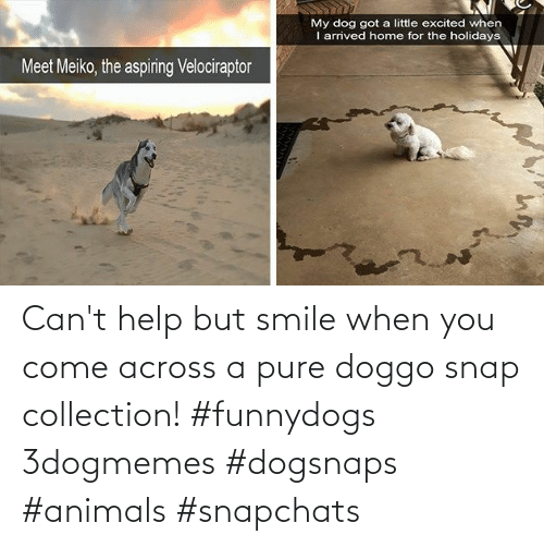 Cant: Can't help but smile when you come across a pure doggo snap collection! #funnydogs 3dogmemes #dogsnaps #animals #snapchats