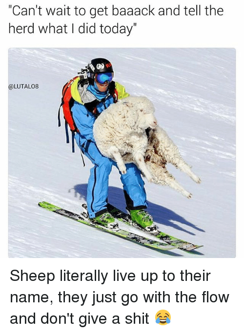 """Memes, Shit, and Live: """"Can't wait to get baaack and tell the  herd what I did today  (a LUTALO8 Sheep literally live up to their name, they just go with the flow and don't give a shit 😂"""