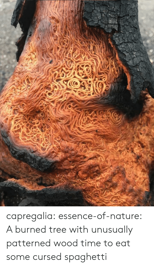 Essence: capregalia:  essence-of-nature:   A burned tree with unusually patterned wood    time to eat some cursed spaghetti