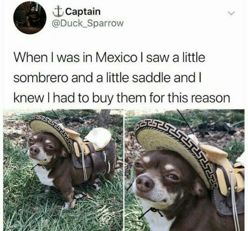 Dank, Saw, and Duck: Captain  @Duck Sparrow  When I was in Mexico I saw a little  sombrero and a little saddle and I  knew I had to buy them for this reason  ב