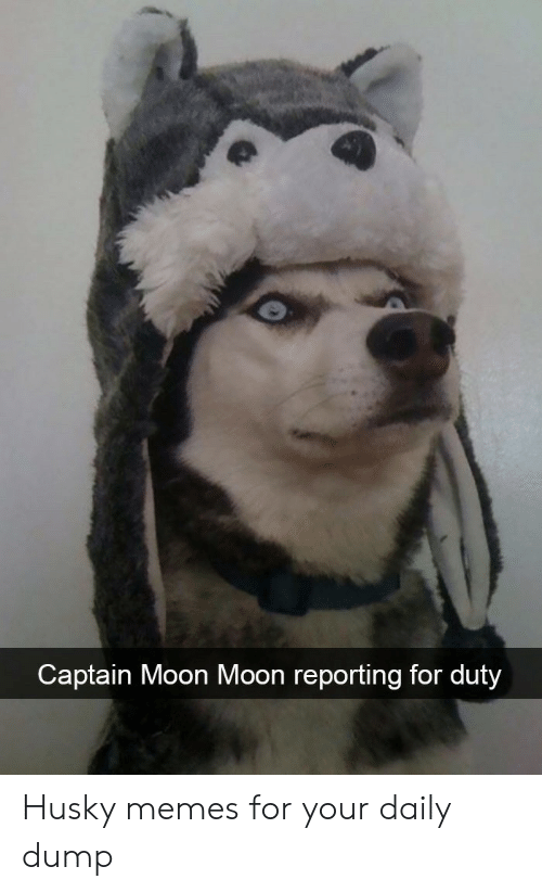 Memes, Husky, and Moon: Captain Moon Moon reporting for duty Husky memes for your daily dump