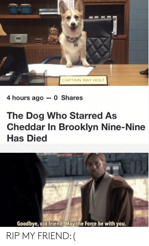 starred: CAPTAIN RAY HOLT  4 hours ago 0 Shares  The Dog Who Starred As  Cheddar In Brooklyn Nine-Nine  Has Died  Goodbye, old friend, May the Force be with you. RIP MY FRIEND:(