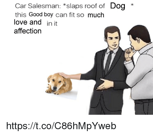 Love, Memes, and Good: Car Salesman: *slaps roof of Dog *  this Good boy can fit so much  love and in it  affection https://t.co/C86hMpYweb
