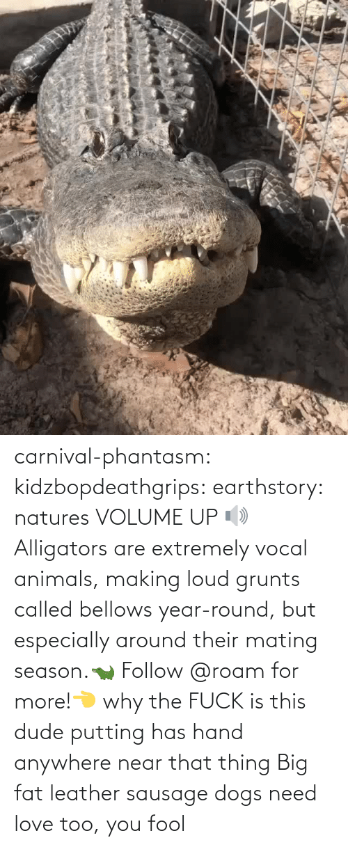 putting: carnival-phantasm:  kidzbopdeathgrips:   earthstory:  natures VOLUME UP 🔊 Alligators  are extremely vocal animals, making loud grunts called bellows  year-round, but especially around their mating season.🐊 Follow @roam for more!👈   why the FUCK is this dude putting has hand anywhere near that thing   Big fat leather sausage dogs need love too, you fool