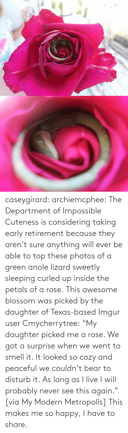 "Bear: caseygirard:  archiemcphee:   The Department of Impossible Cuteness is considering taking early retirement because they aren't sure anything will ever be able to top these photos of a green anole lizard sweetly sleeping curled up inside the petals of a rose. This awesome blossom was picked by the daughter of Texas-based Imgur user Cmycherrytree: ""My daughter picked me a rose. We got a surprise when we went to smell it. It looked so cozy and peaceful we couldn't bear to disturb it. As long as I live I will probably never see this again."" [via My Modern Metropolis]   This makes me so happy, I have to share."