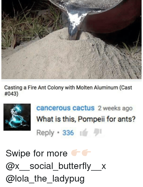 Fire, Memes, and Butterfly: Casting a Fire Ant Colony with Molten Aluminum (Cast  #043)  cancerous cactus 2 weeks ago  What is this, Pompeii for ants?  Reply 336 Swipe for more 👉🏻👉🏻 @x__social_butterfly__x @lola_the_ladypug